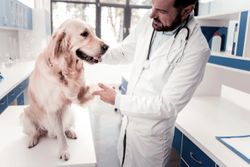Read this before performing your next veterinary orthopedic exam