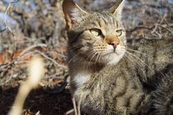 Report recommends actions to save Australian wildlife from cats