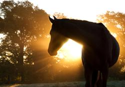 3 Must-reads on equine medicine