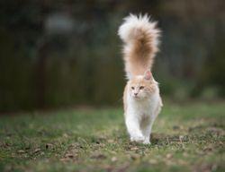 3 Must-reads on feline medicine
