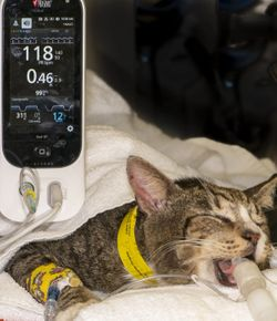The ABCs of veterinary dentistry: V is for ventilation monitoring