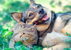 Pet insurance proves valuable to many clients