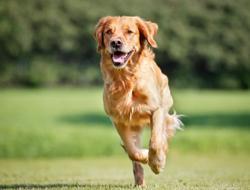 3 Must-reads on veterinary orthopedics