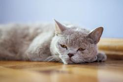 3 must-reads on veterinary endocrinology