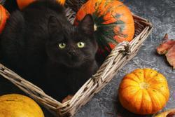 News-wrap up: This week's veterinary headlines, plus celebrating World Animal Day