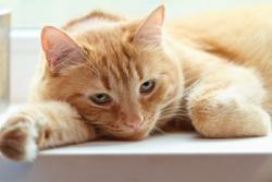 3 must-reads on feline heartworm disease