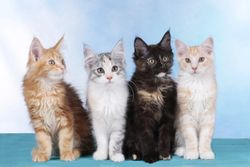 Winn Feline Foundation is now EveryCat Health Foundation