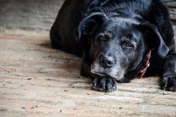 5 Pillars of veterinary hospice care