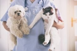 Glucose requires monitoring in the canine/feline veterinary patient