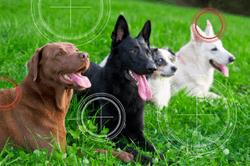 Keep zoonotic parasites on your radar