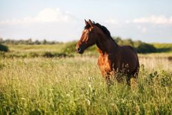 Endoscopy and respiratory disease in horses