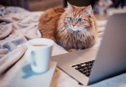 News wrap-up: This week's veterinary headlines, plus a pet food brand recall goes international