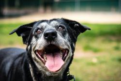 Canine Osteosarcoma: Teaching an Old Dog New Tricks