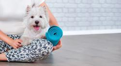 Vet's Best Friend emphasizes mental well-being with company-wide yoga series