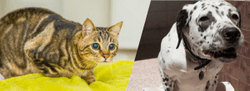 Nutritional management of urolithiasis in dogs and cats