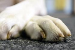 Tricky toes: Considerations regarding canine digit amputation