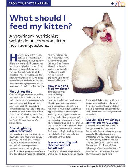 The kitten kibble conundrum | DVM 360