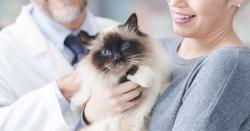 Yes, your pet must visit the veterinary office