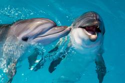 Study to assess impact of passing boats on dolphin's behavior and stress levels