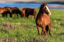 Boehringer Ingelheim awards five veterinarians with equine research funds