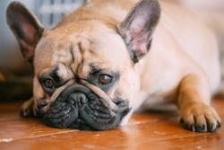 3 must-reads on canine IBD