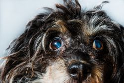 3 Must-reads on canine ophthalmology