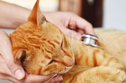 Tales from the trenches: Veterinary professionals talk pet insurance