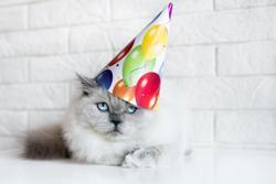 4 ways to honor your veterinary technicians