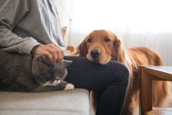 Setting the timetable for sterilizing pets