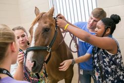 Junior Vet Camp contest set to launch next week