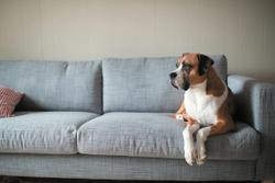 Separation anxiety in dogs may affect quality of life