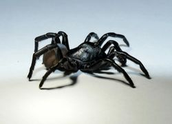 Say hello to a brand-new spider species