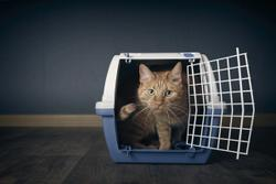 Tips and tricks for getting anxious cats to the vet