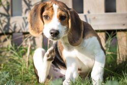 3 Must-reads on veterinary dermatology