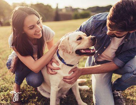 How the human-animal bond is reshaping veterinary medicine