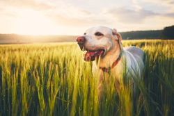 Have a heart: why dogs need heartworm testing