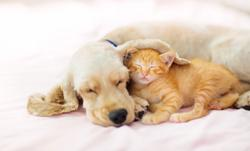 Factors affecting your deworming protocols for puppies and kittens