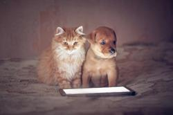 This week on dvm360: Non-invasive thermometer for dogs and cats, plus more veterinary news