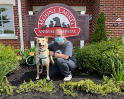 "NJ animal hospital creates ""Happy Visits"" for anxious patients"