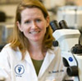 Susan E. Little, DVM, PhD, DACVM (parasitology)