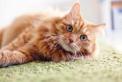 3 Must-reads on feline behavior