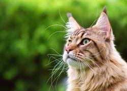 Basepaws partners with Project 25 to extend cats' lifespans