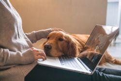 San Francisco SPCA challenges restrictive telemedicine policy