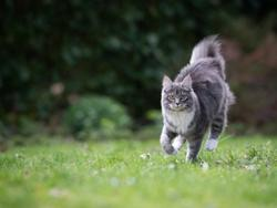 Demystifying the many myths about cats