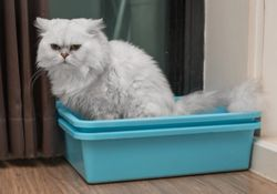 Management tips for constipated cats