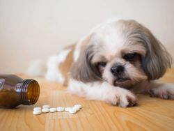WVC—Opioids in veterinary medicine: panacea and pandemonium