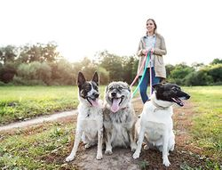 New pet ownership data can help practices grow