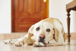 FDA conditionally approves first oral treatment for canine idiopathic epilepsy, under its expanded authority