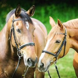 Game-changing equine barrier cream now available