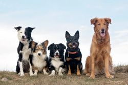 Morris Animal Foundation establishes its first canine advisory board
